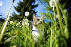 Gato en jardín fotos de archivo libres de regalías