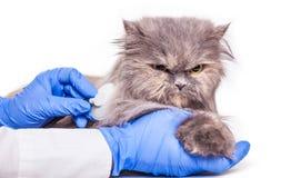 Gato en la admisión a una clínica veterinaria Fotografía de archivo libre de regalías
