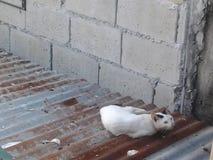 Gato en la azotea Imagenes de archivo