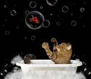 Gato en la bañera 1 foto de archivo libre de regalías