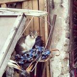 Gato en la basura, Novi Sad Foto de archivo libre de regalías
