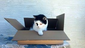 Gato en la caja fotos de archivo