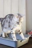 Gato en la caja de arena Foto de archivo