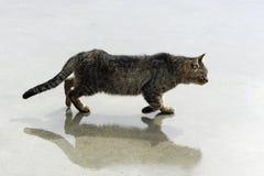 Gato en la calle foto de archivo libre de regalías