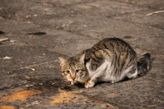 Gato en la calle Imagen de archivo libre de regalías