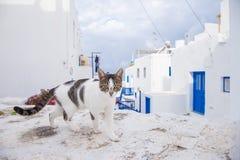 Gato en la calle en Mykonos, Grecia Fotos de archivo libres de regalías