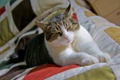 Gato en la cama imagen de archivo libre de regalías