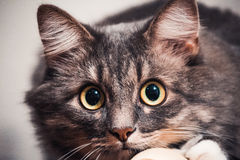 Gato en la cama Fotografía de archivo libre de regalías