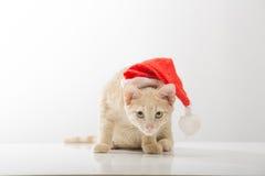 Gato en la campana de Santa Claus Foto de archivo