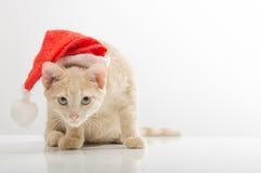 Gato en la campana de Santa Claus Foto de archivo libre de regalías