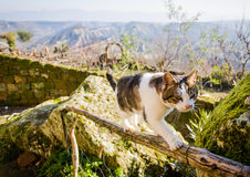 Gato en la cerca Foto de archivo libre de regalías