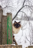 Gato en la cerca Fotografía de archivo
