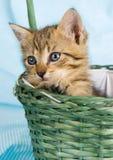Gato en la cesta Foto de archivo libre de regalías