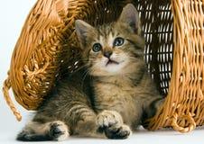 Gato en la cesta Fotos de archivo libres de regalías
