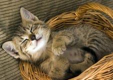 Gato en la cesta Fotografía de archivo