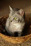Gato en la cesta Imagen de archivo libre de regalías