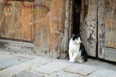 Gato en la ciudad Imagen de archivo libre de regalías