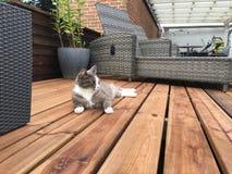 Gato en la cubierta de madera Fotografía de archivo libre de regalías