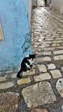 Gato en la esquina Foto de archivo libre de regalías