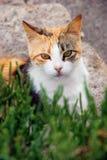 Gato en la hierba Imagenes de archivo