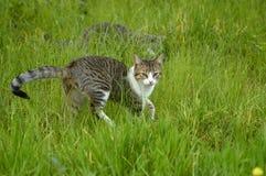 Gato en la hierba Fotos de archivo