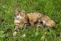 Gato en la hierba Foto de archivo libre de regalías