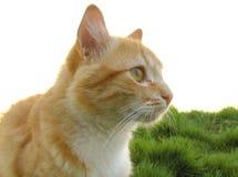 Gato en la hierba Imagen de archivo libre de regalías