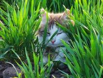 Gato en la hierba fotografía de archivo libre de regalías