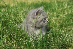 Gato en la hierba Imágenes de archivo libres de regalías