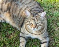 Gato en la hierba al aire libre imagen de archivo