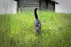 Gato en la hierba larga y la choza en la colina Foto de archivo libre de regalías