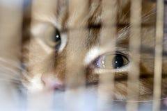 Gato en la jaula en la exposición Imagen de archivo