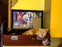 Gato en la maleta Foto de archivo libre de regalías