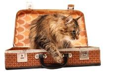 Gato en la maleta sol-marrón foto de archivo