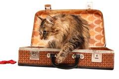 Gato en la maleta sol-marrón Imagenes de archivo