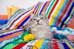 Gato en la manta tejida multicolora Imagen de archivo libre de regalías