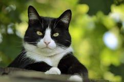 Gato en la mirada del tejado en la cámara Fotografía de archivo