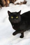 Gato en la nieve fotografía de archivo