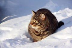 Gato en la nieve imagen de archivo