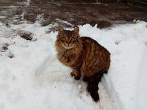 Gato en la nieve blanca imagen de archivo