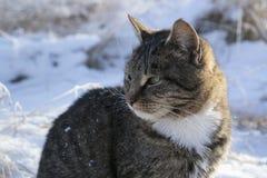 Gato en la nieve en el invierno Imagen de archivo libre de regalías