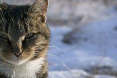 Gato en la nieve en el invierno Fotos de archivo