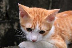 Gato en la pared Imagenes de archivo