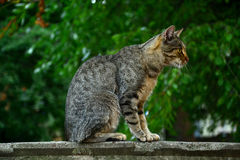 Gato en la pared Imagen de archivo