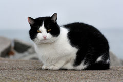 Gato en la pared de piedra Fotografía de archivo