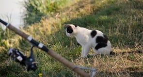Gato en la pesca Foto de archivo