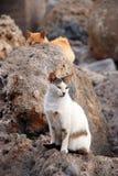 Gato en la piedra Fotografía de archivo