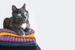 Gato en la pila de diversos suéteres para el invierno y el otoño Fotografía de archivo