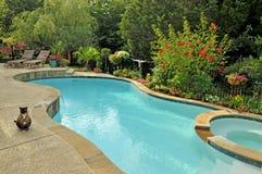 Gato en la piscina suburbana foto de archivo libre de regalías