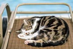 Gato en la playa Foto de archivo libre de regalías